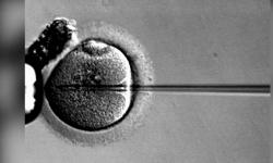 Reino Unido: Autorización de modificación genética de embriones es muy grave éticamente